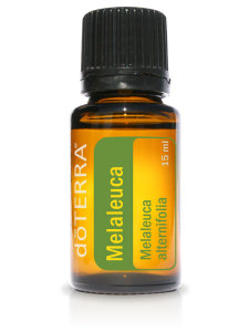 tea trea oil essential oils melaleuca